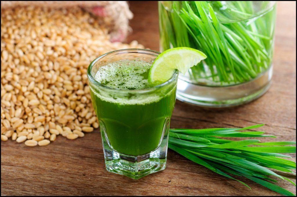 Wheatgrass – A Highly Alkalizing Food Everyone Should